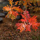 Autumn Garden by JodieT