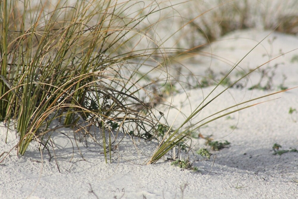 Beach grass by wingsonafield