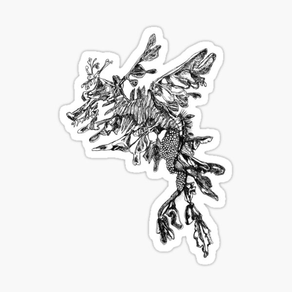 Steve the Leafy Sea Dragon Sticker