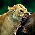 Nothing beats a venison steak by Alan Mattison