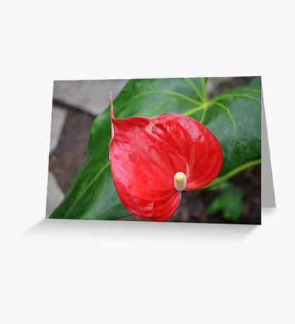 Red Heart Shaped Anthurium and leaf Greeting Card