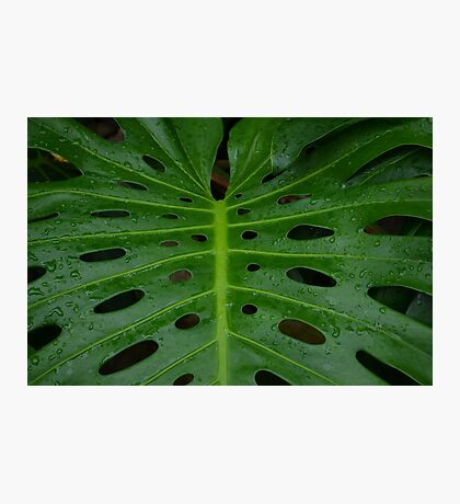 Grean leaf with holes for its design Photographic Print