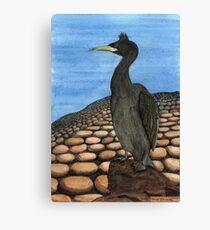 214 - SHAG (PHALACROCORAX ARISTOTELIS) - DAVE EDWARDS - INK & WATERCOLOUR - 2008 Canvas Print