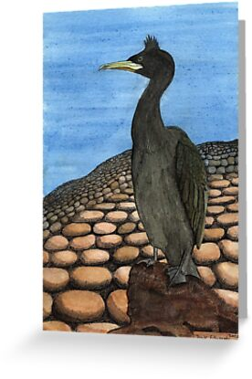 214 - SHAG (PHALACROCORAX ARISTOTELIS) - DAVE EDWARDS - INK & WATERCOLOUR - 2008 by BLYTHART