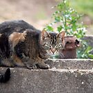 Neighbour's Cat  by vbk70