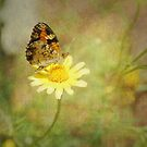 Phaon Crescentspot Butterfly by Linda Trine