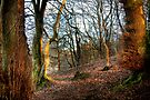 Early Evening Light on Bare Trees by Christine Smith