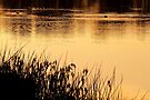 """""""On Golden Pond"""" by Heather Thorning"""
