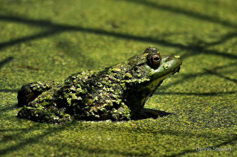 Nature's Camo by Dennis Stewart