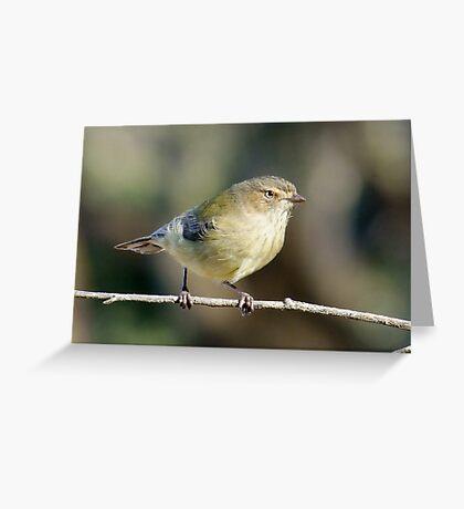 Little weebill Greeting Card