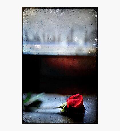Misty Rose III Photographic Print