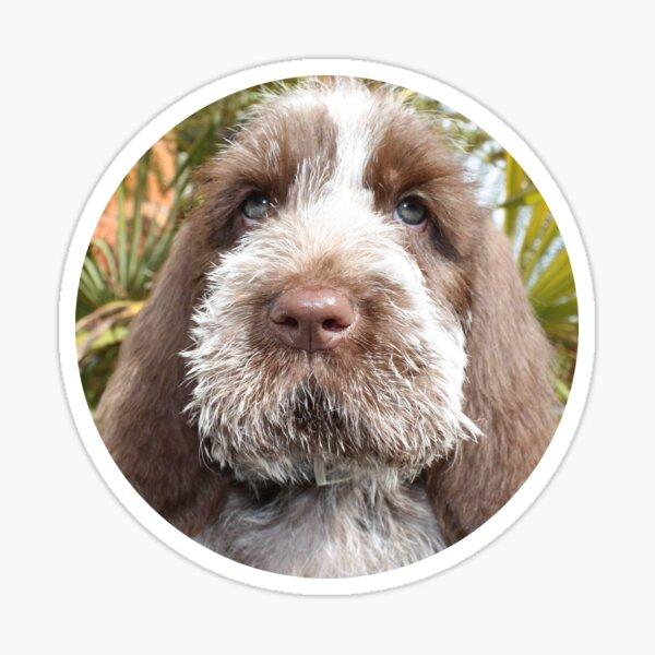 Brown Roan Spinone Puppy Sticker