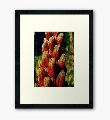 Cracked Aloe Framed Print