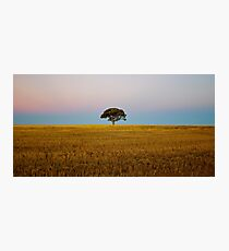 Endless Gold — The Tree Photographic Print
