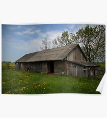 Spring in old farmstead (Barn: chickens, pigs, sheeps, cows) Poster