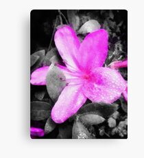 Pink & Gray Canvas Print