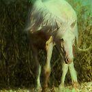Wild White Horse New Forest by DExPIX