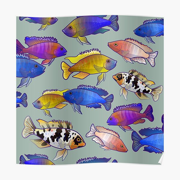 African Peacock Cichlids Poster