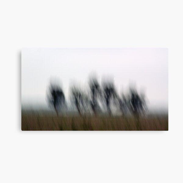 Five Trees Canvas Print