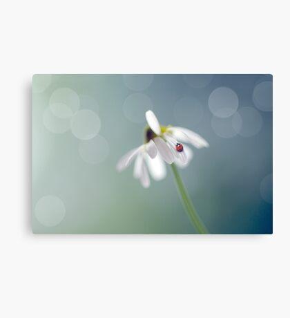 Chamomile and Ladybird Canvas Print