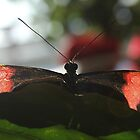Butterfly Close up by dmwarnman