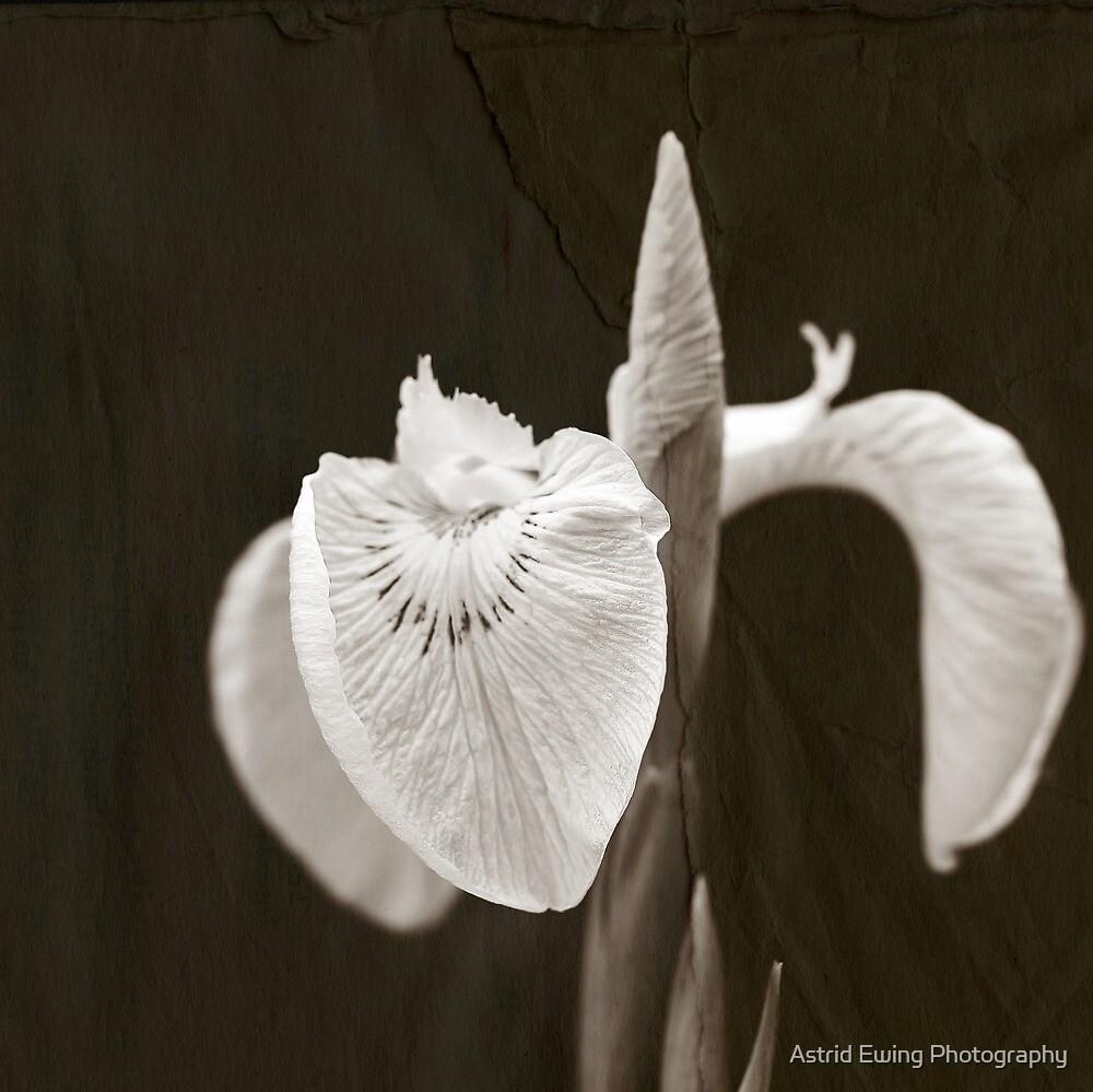 harmony by ASTRID EWING