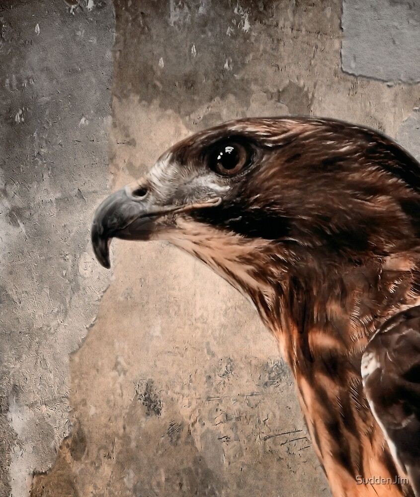 Red Tailed Hawk, Redux by SuddenJim