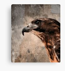 Red Tailed Hawk, Redux Canvas Print