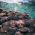 Fishstack, early morning - Maldives by shellfish