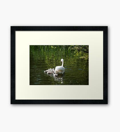 From Nest to Water Framed Print