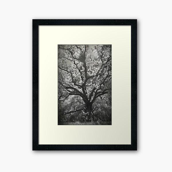 A Life Worth Living Framed Art Print
