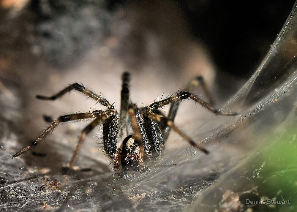 Realm of the Arachnid  by Dennis Stewart