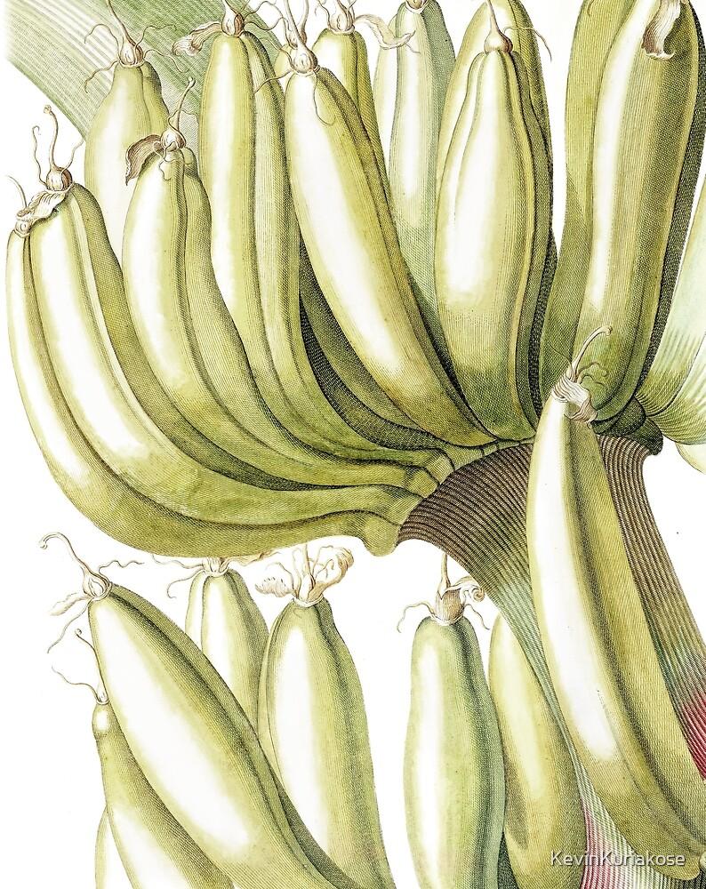 Botanical Musa Print by KevinKuriakose