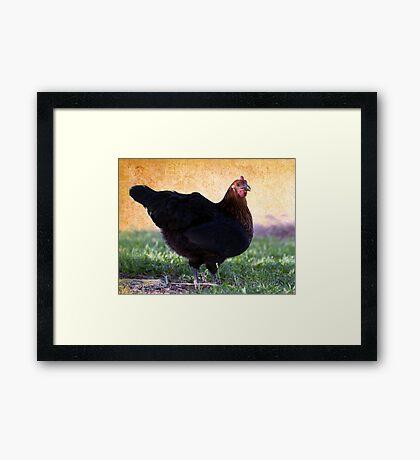 Chicken Licken Framed Print