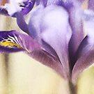 *Iris dance* by funkymarmalade