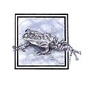 Pristimantis Rain Frog by Cantus