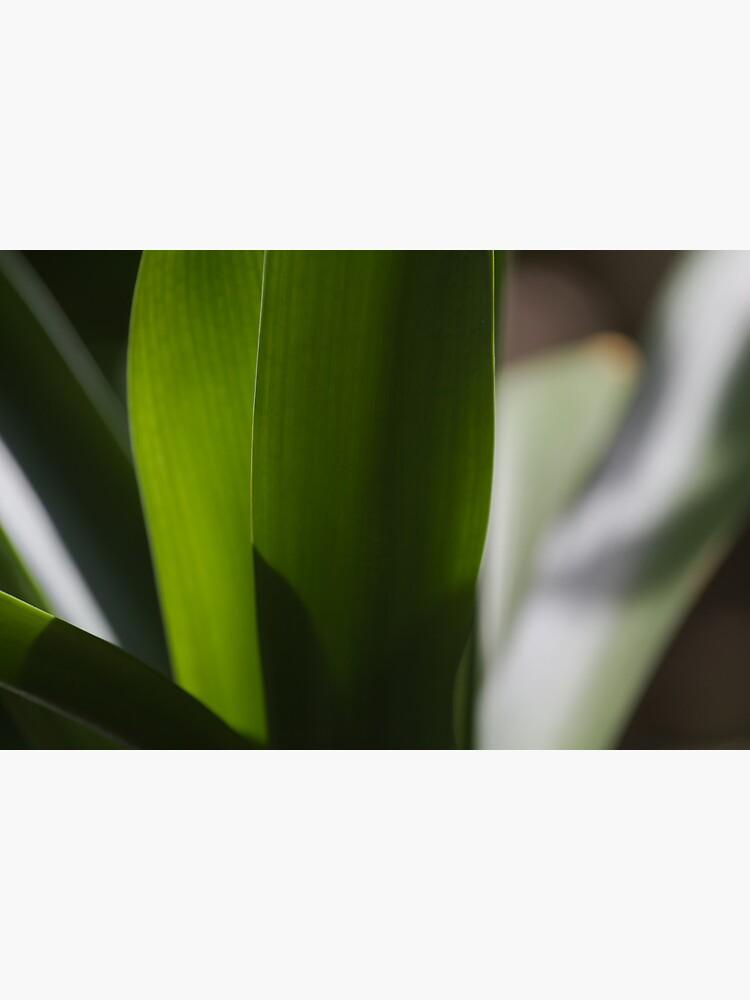 Leaves by LynnWiles