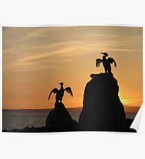 Cormorants at sunset Poster