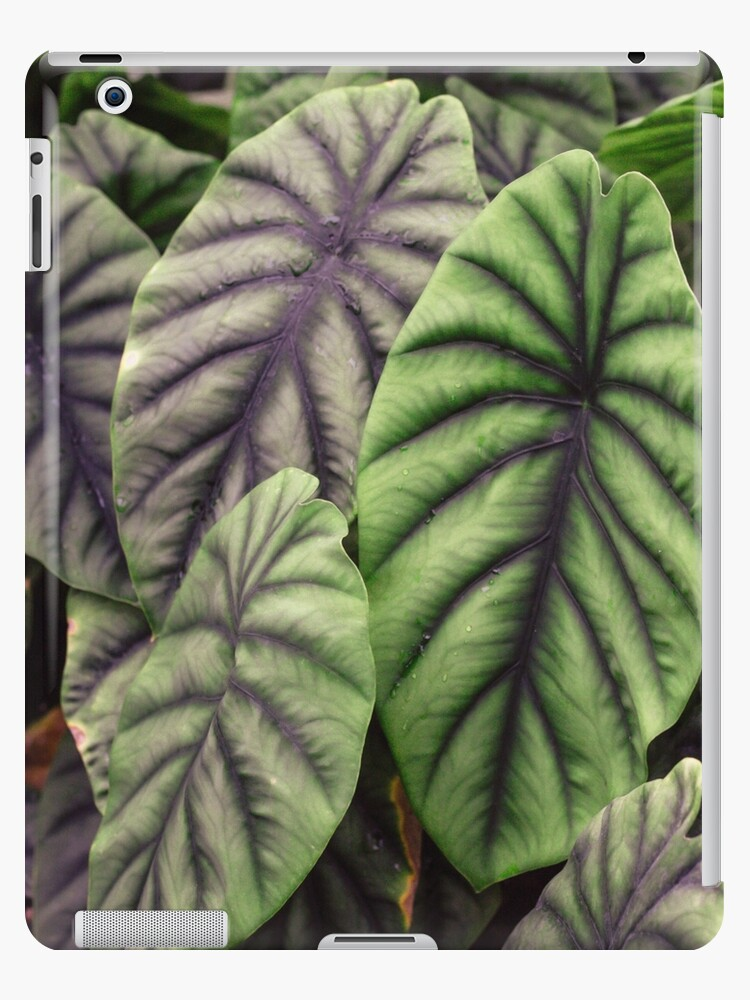 Leaves Tropical Plants Ipad Case Skin By Vbmatossy Redbubble