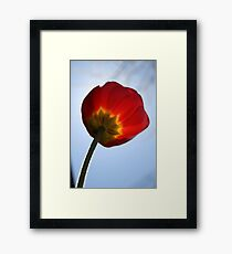 Fuzzy Tulip Framed Print