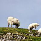 A Woolly Jumper by Lynne Morris