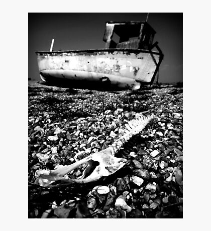 Bleached Bones Photographic Print