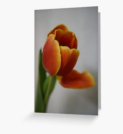 The ember in a nursery fire ... Greeting Card