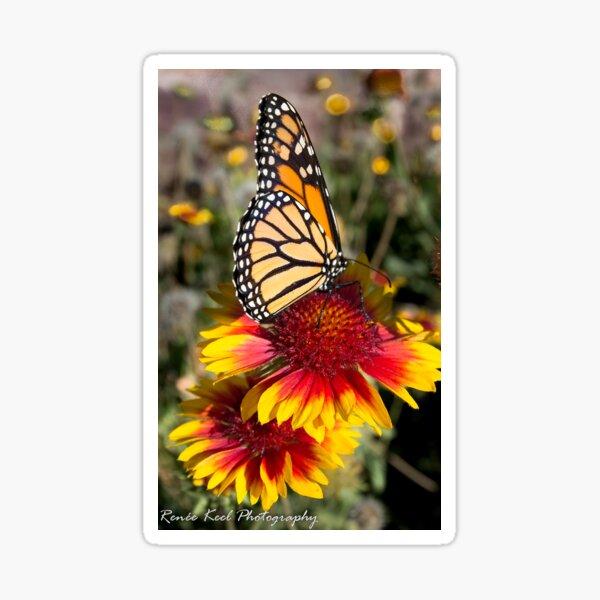 Succulent Springtime Sticker