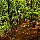 Namsan Forest by Barbara  Brown