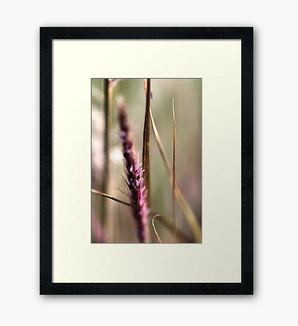 Delicate Grasses Framed Print