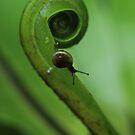 snails pace. by newcastlepablo