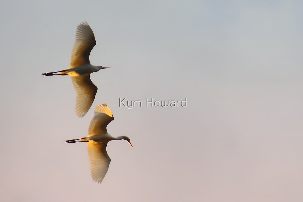 Heron Airlines by Kym Howard