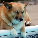 Dog Tired by Renee Blake