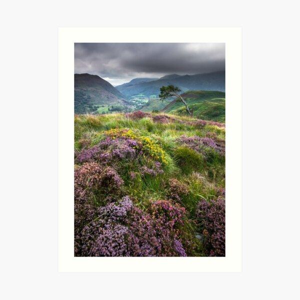 Snowdonia - Heather & Gorse above Beddgelert Art Print